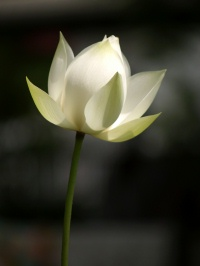 Lotus2_2